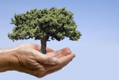 H‰nde mit Baum